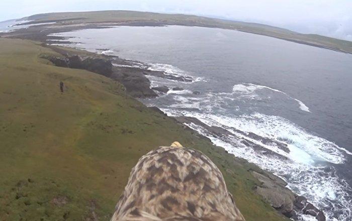 Vue à dos d'aigle