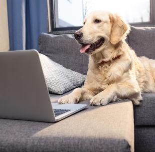 Mieux que Facebook: comment les animaux créent leurs propres réseaux sociaux