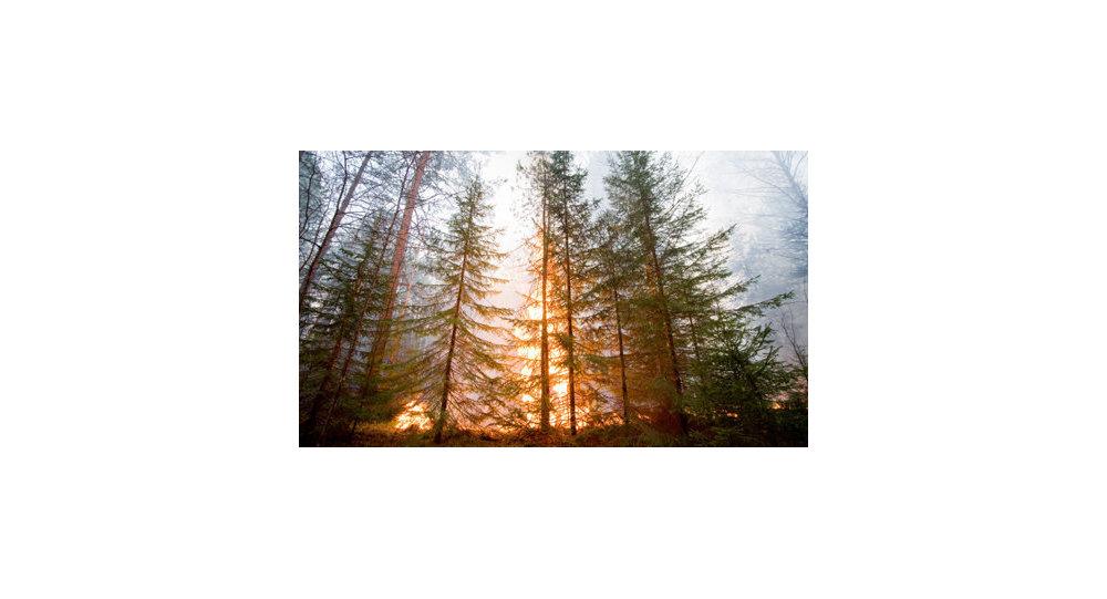 La couleur ardente des feux de forêt