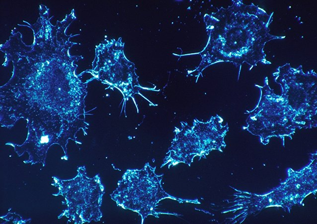 Des cellules de cancer (image d'illustration)