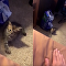 Kitten Turns Tables on Demanding Owner