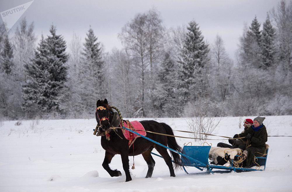 Promenades équestres dans la région de Moscou