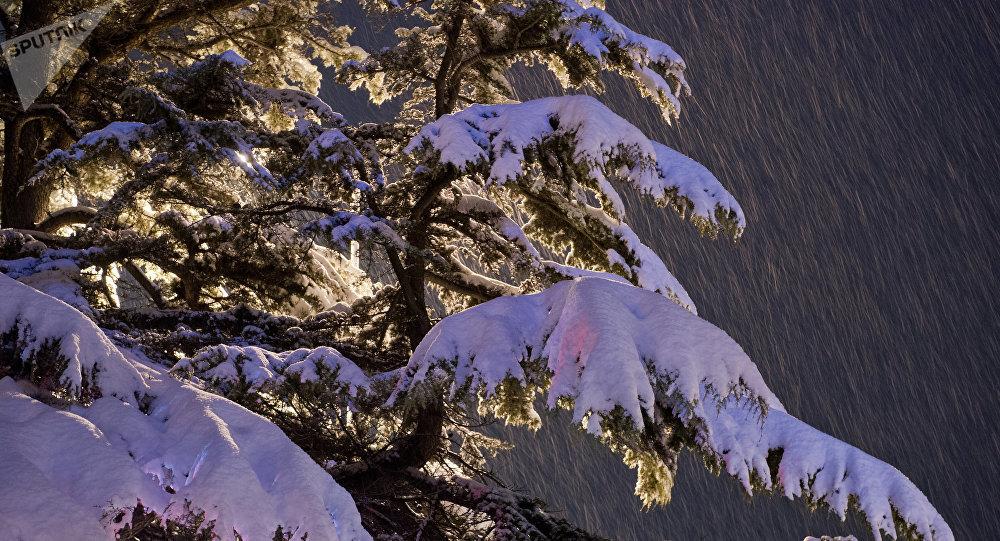 le neige (image d'illustration)