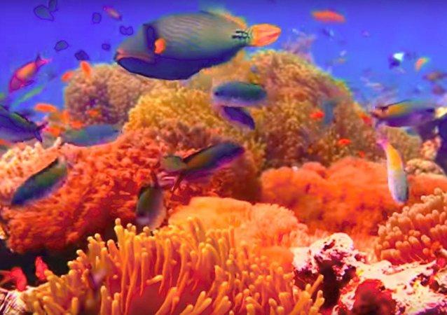 Un monde sous-marin à couper le souffle