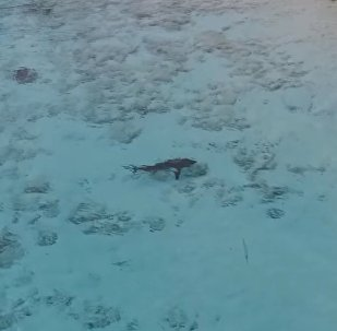 Un enfant échappe à l'attaque de quatre requins