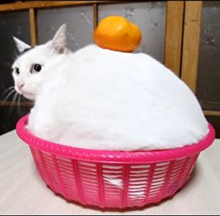 みみ鏡餅 Kagamimochi  170103