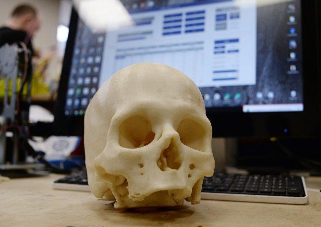 Modèle d'un crâne (image d'illustration)