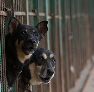 Chiens dans un refuge pour les animaux