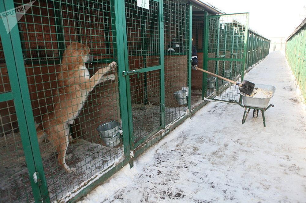 Abri des animaux à Rudnevo, région de Moscou.