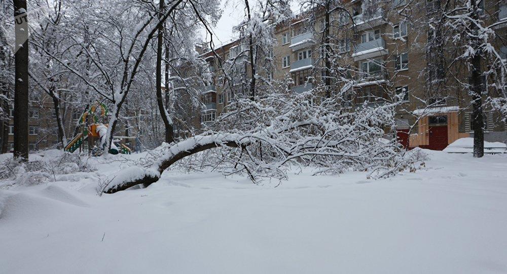 Un arbre tombé