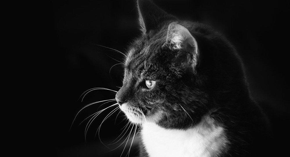 un chaton survit apr s un passage de 30 minutes la. Black Bedroom Furniture Sets. Home Design Ideas