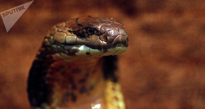 Saurez-vous trouver le serpent sur cette photo?