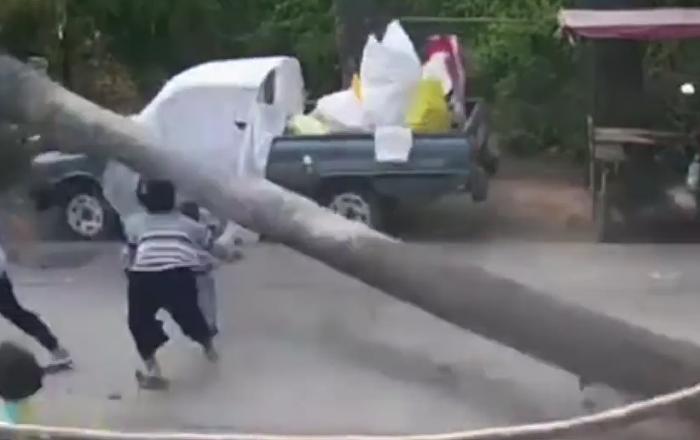 Un énorme palmier s'est effondré à quelques centimètres d'un enfant