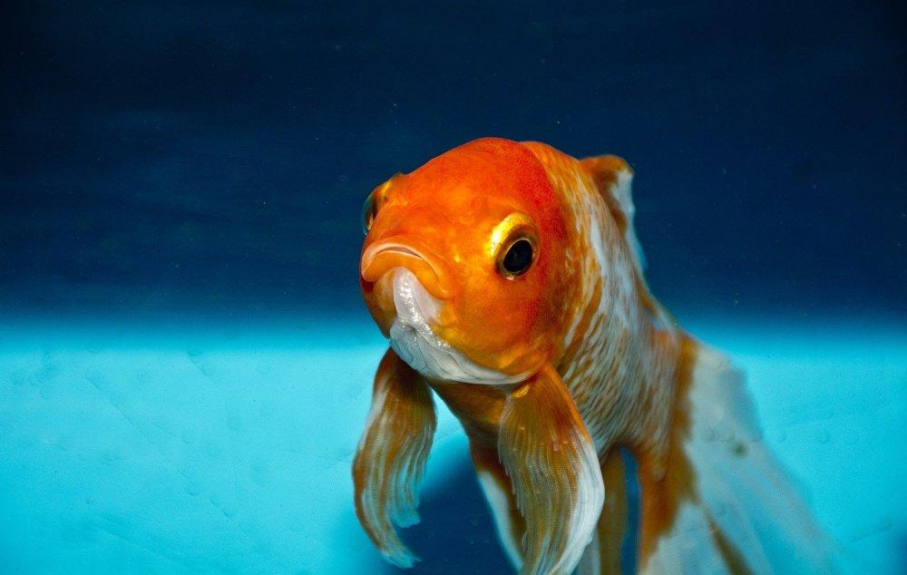 La taille des poissons diminuerait de 20 à 30 pour cent
