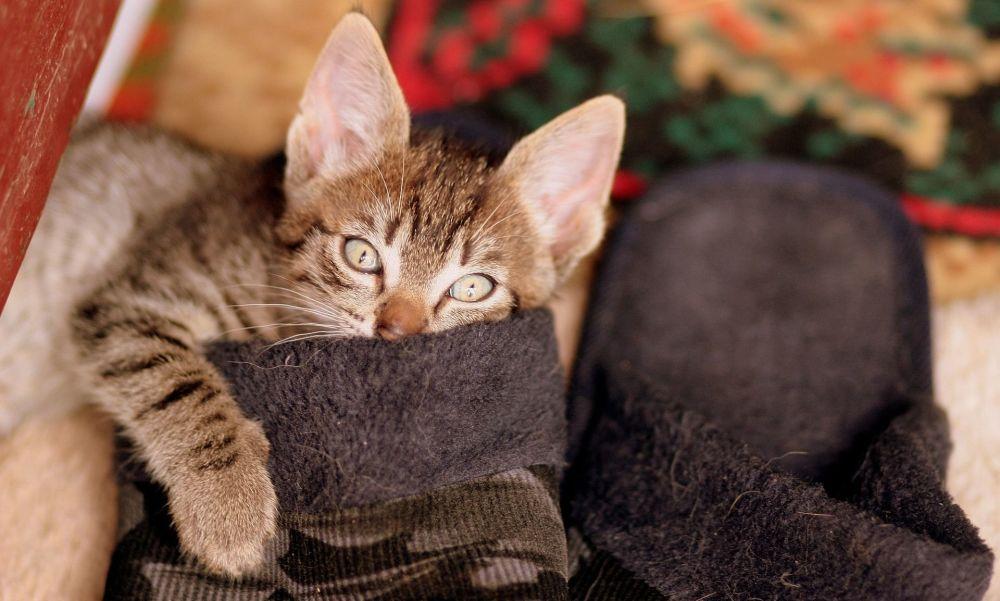 Vie des chats