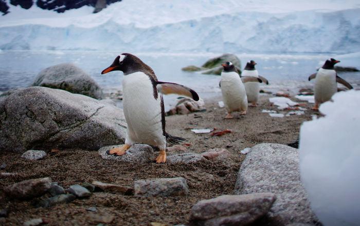 Antarctique menacée