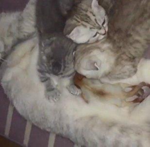L'amour d'une mère ne connait pas de limite: un chat «adopte» un bébé écureuil au Kazakhstan