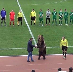 Cet ours est sorti de son hibernation pour ouvrir un match de foot en Russie!