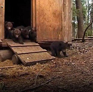 Grâce à ce biologiste, ces oursons peuvent grandir en sécurité