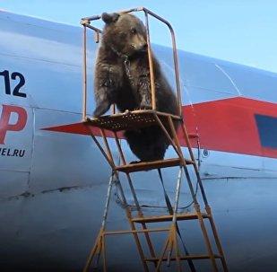 Cet ours Mansour est un vrai membre de cette équipe de pilotes!