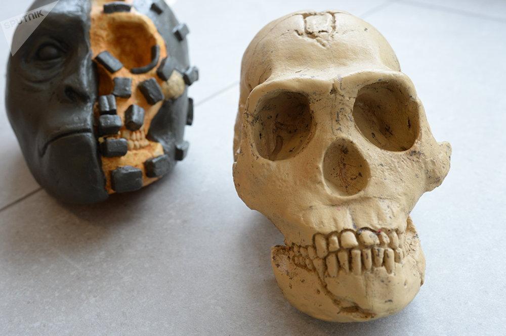 Démonstration grandeur nature de la méthode de reconstitution sculptée sur l'exemple du moulage d'un crâne d'Homo naledi et une semi-reconstitution