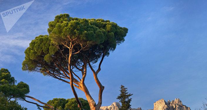 un arbre (image d'illustration)