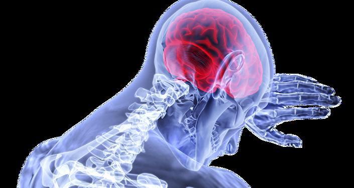 Cerveau humaine