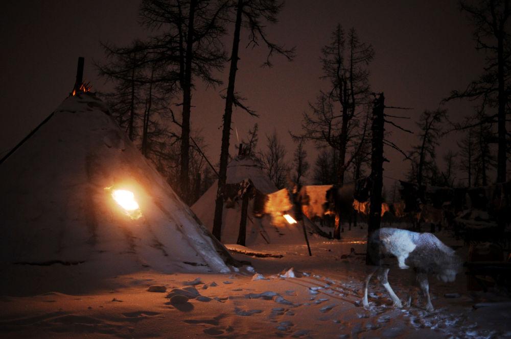 Un campement d'éleveurs de rennes dans le district autonome de Yamalo-Nenets.
