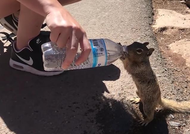 un écureuil soif