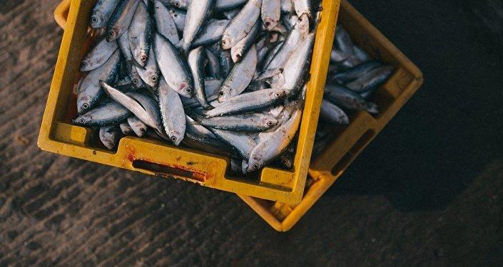 Pêche. Image d'illustration
