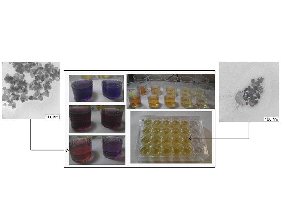 Des scientifiques russes démontrent la toxicité des nanoparticules d'argent