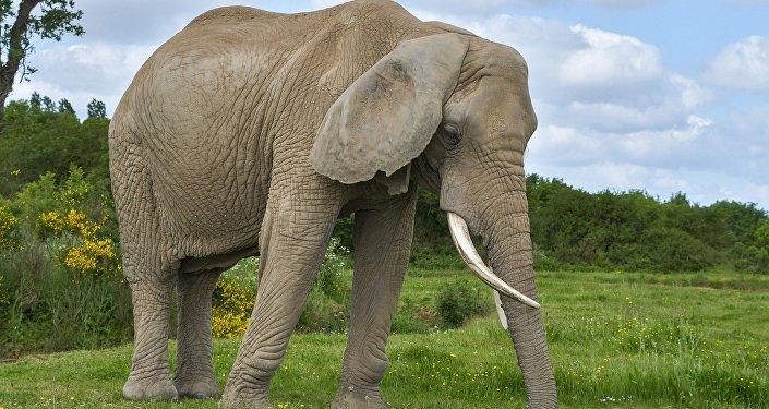 Une touriste allemande piétinée à mort par un éléphant — Zimbabwe