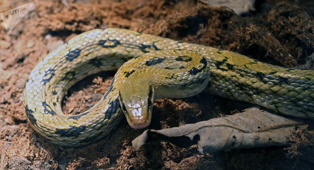 Un serpent (image d'illustration)