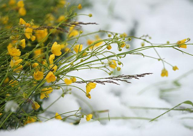 La neige en été (image d'illustration)