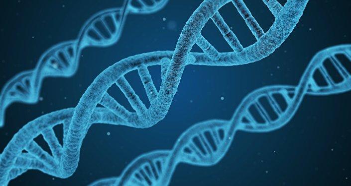l'ADN