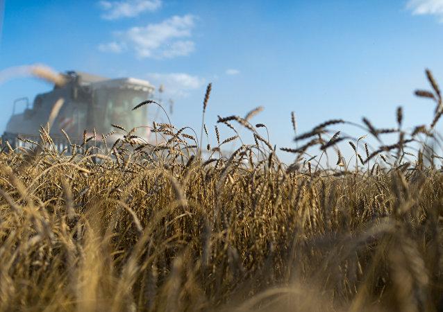 Pourquoi le business français veut-il renforcer ses liens dans le secteur agricole en Russie? (image d'illustration)