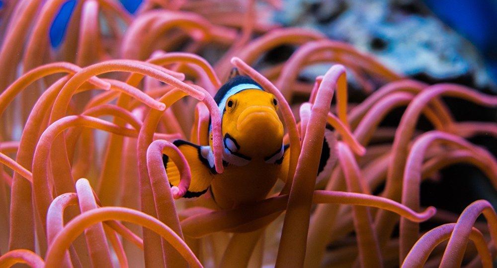 Corail (photo d'illustration)