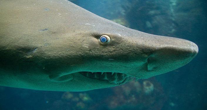 Un homme vole un requin dans un aquarium