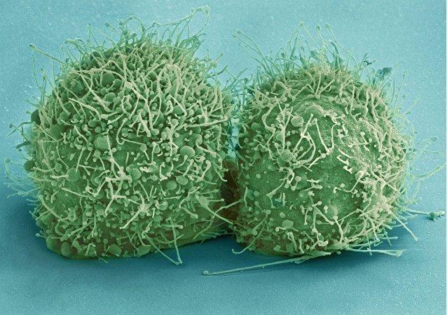 des cellules des bactéries (images d'illustration)
