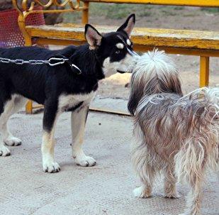 Les habitants de Damas promènent désormais leurs chiens dans les parcs