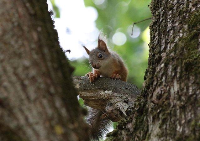 Un bébé écureuil