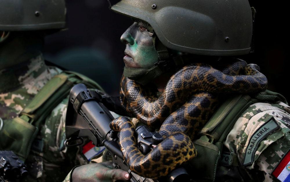 Un soldat des forces spéciales avec un serpent autour du cou lors d'un défilé militaire à Asunción, au Paraguay