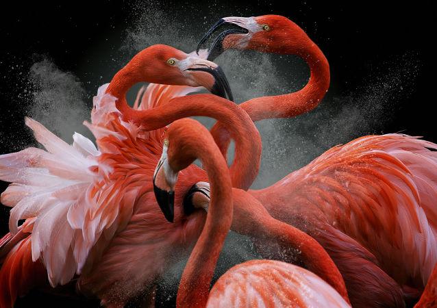 Black Friday, par le photographe péruvien Pedro Jarque Krebs, gagnant du concours de photographie Bird Photographer of the Year 2018.