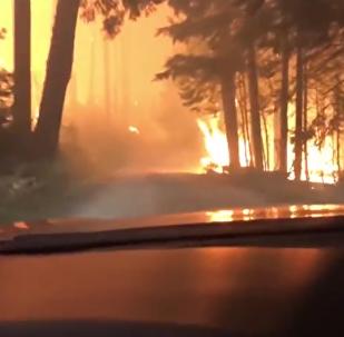Aux portes de la mort: une évasion incroyable d'un incendie en forêt