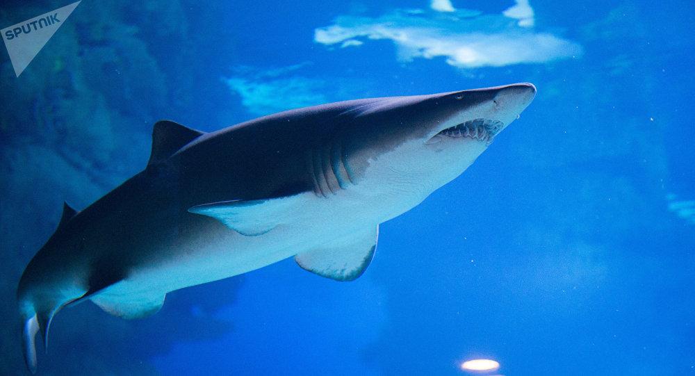 les plages o l on risque de finir dans l estomac d un requin sputnik france. Black Bedroom Furniture Sets. Home Design Ideas