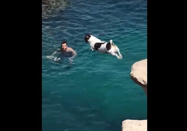 Lorsque ton chien aime plonger!