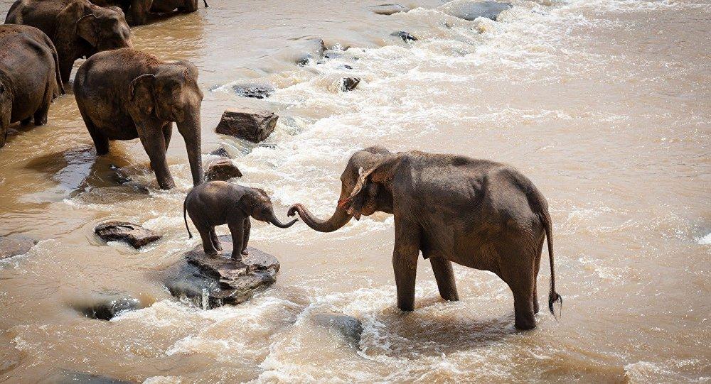 Les elephants (image d'illustration)