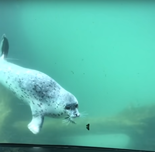 Seal Meets Butterfly
