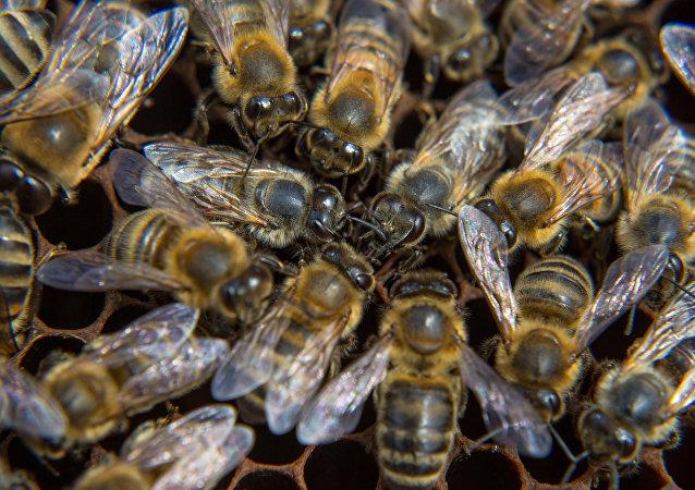 Des abeilles