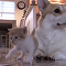chien et chaton